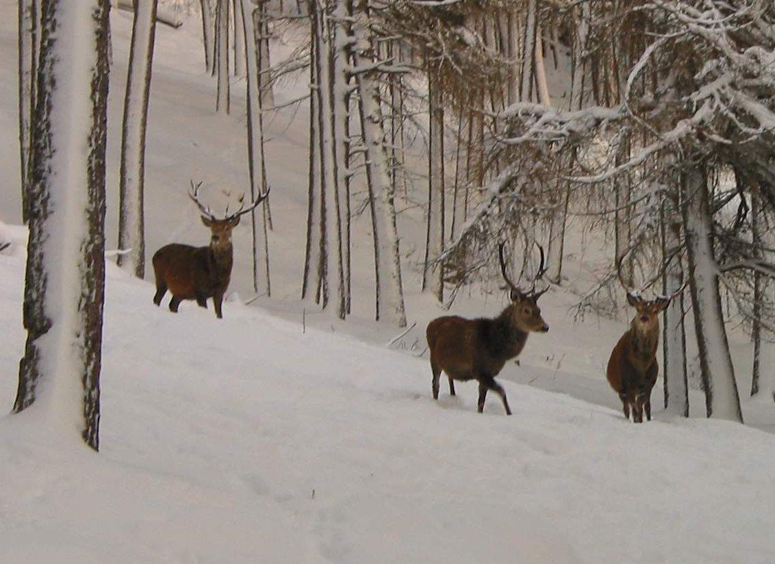 Alvie Estate Deer Feeing